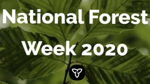 Ontario Supports Northern and Rural Jobs and Communities on the 100th Anniversary of National Forest Week