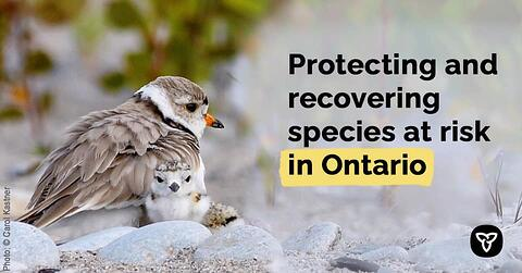 Ontario Helping Communities Protect Species at Risk