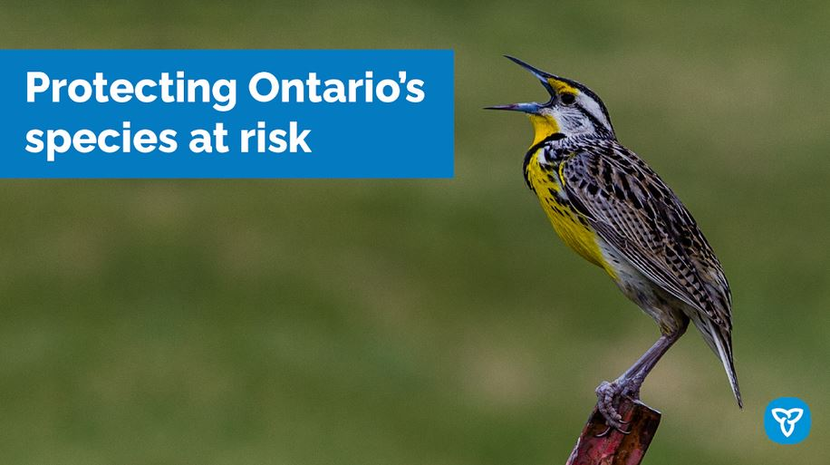 Ontario Enhancing Protection for Species at Risk