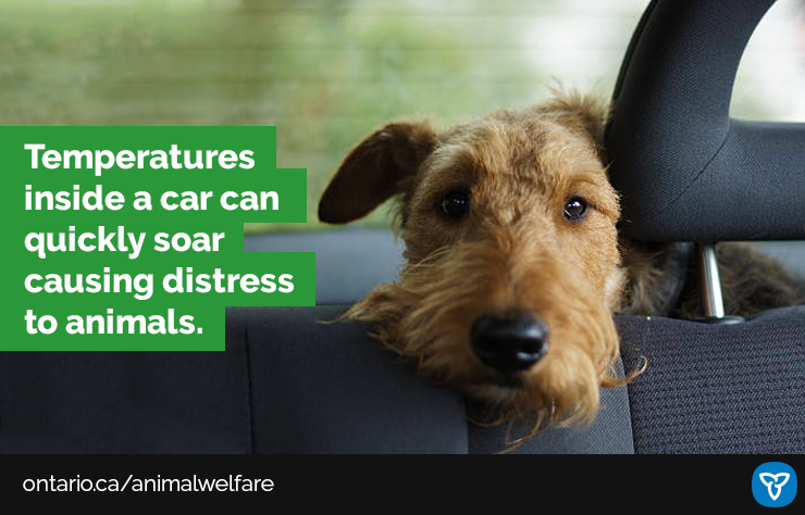 Keep Pets Safe this Summer, Do Not Leave Them in Hot Vehicles